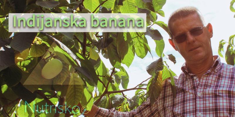 indijanska banana exotic king