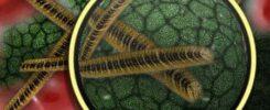 mikrobiota bakterije